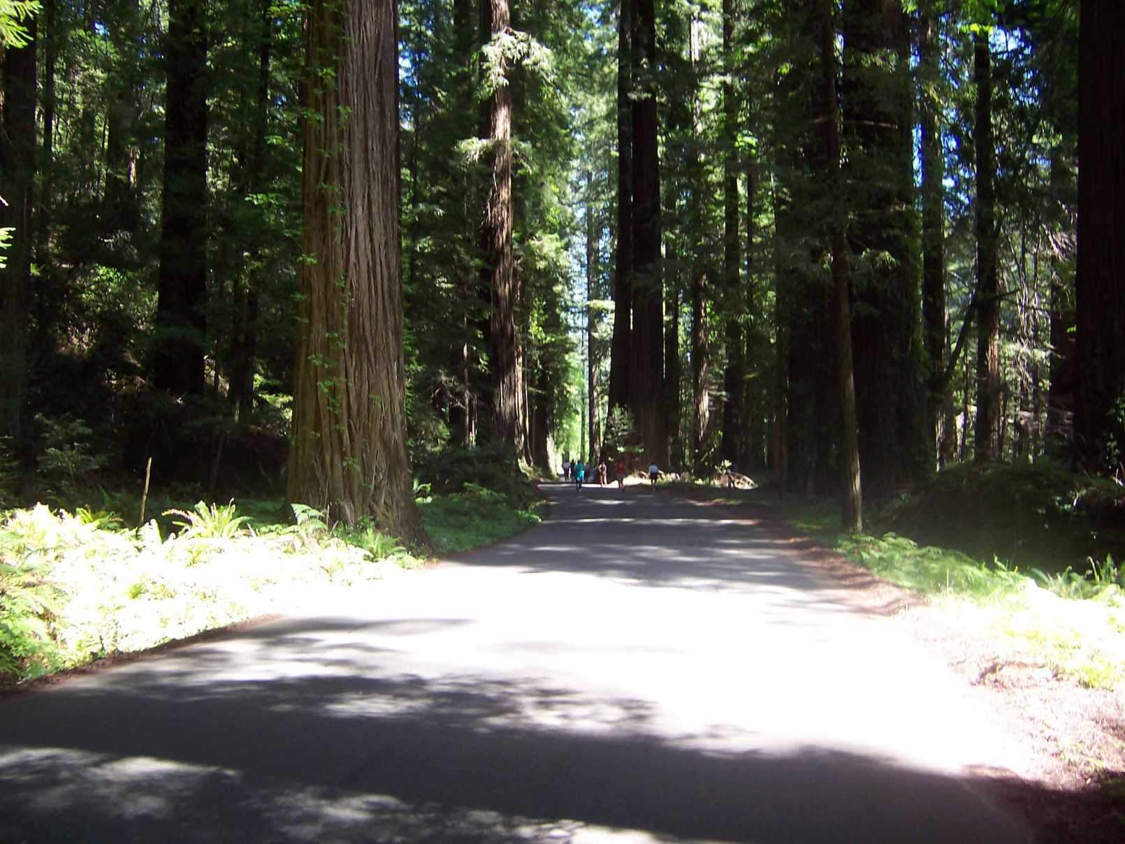 Why they call if Avenue of the Giants